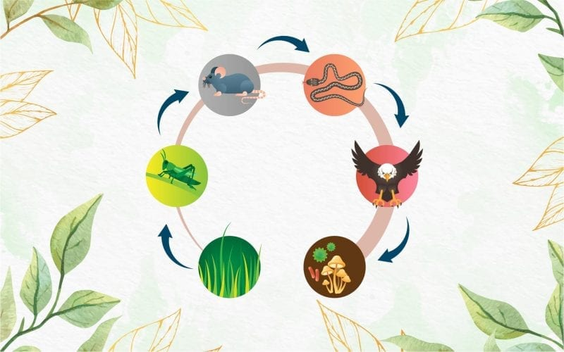 What is Food Chain