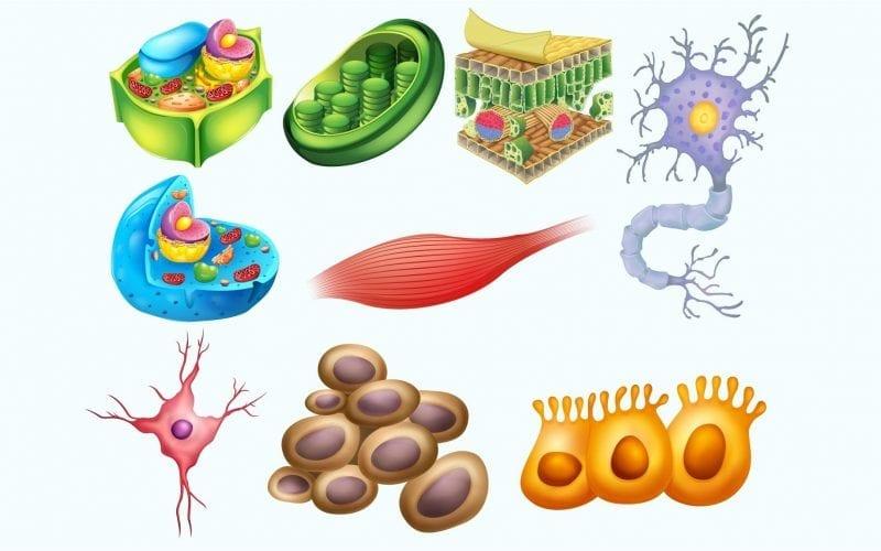 class 11 biological classification