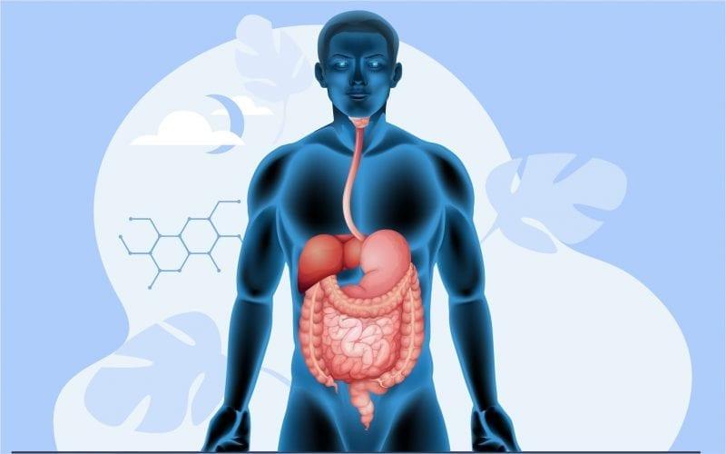 Class 11 Digestion Absorption
