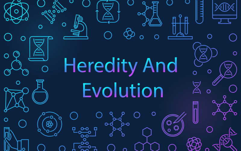 heredity and evolution class 10