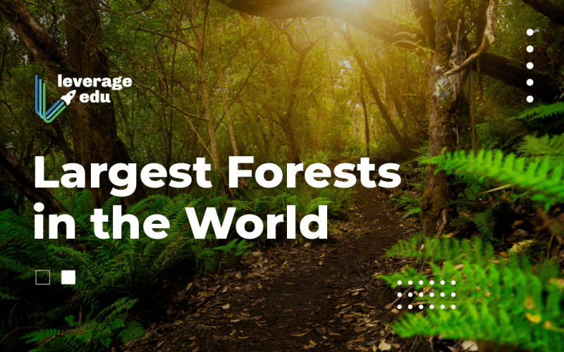 Largest Forests in the World
