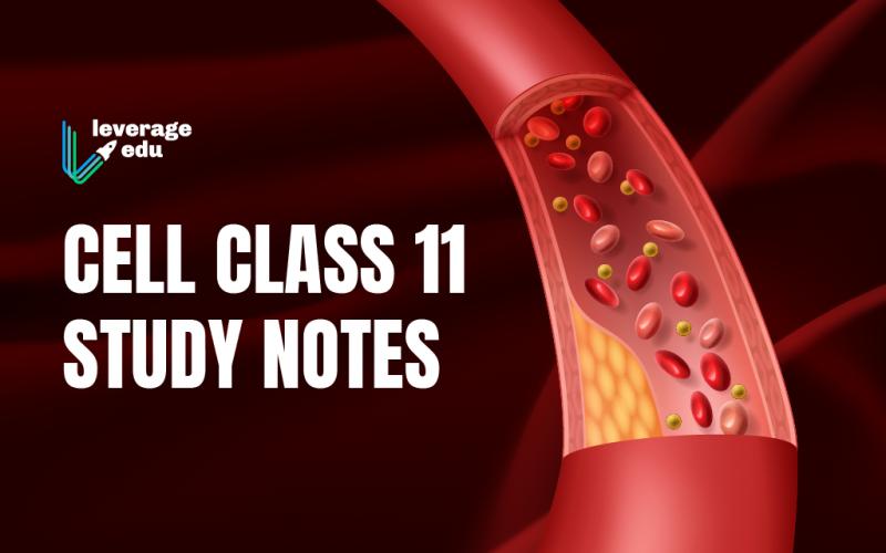 Class 11 Cell