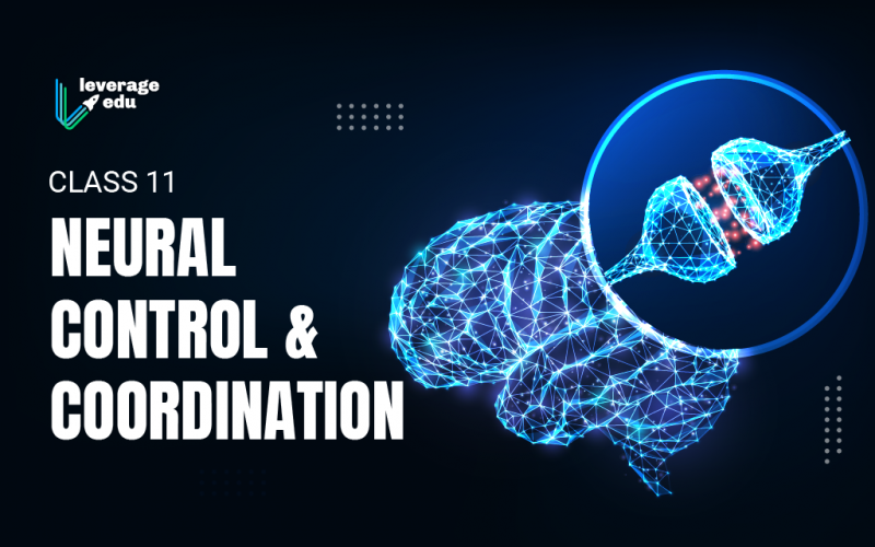 Class 11 Neural Control and Coordination