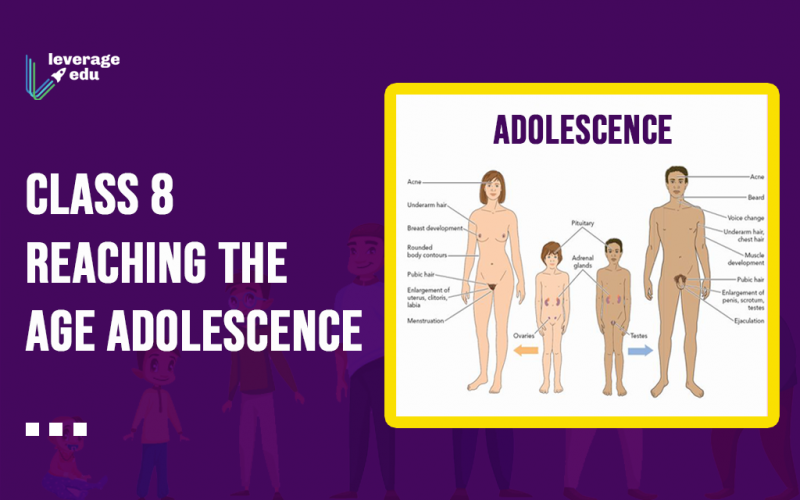 Class 8 Reaching the Age Adolescence