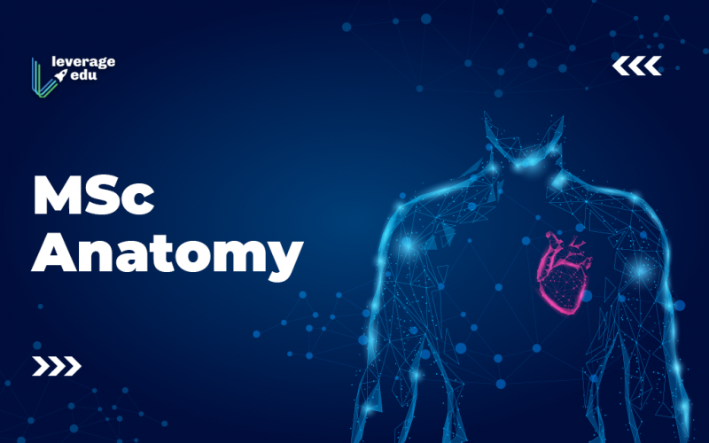 Msc Anatomy