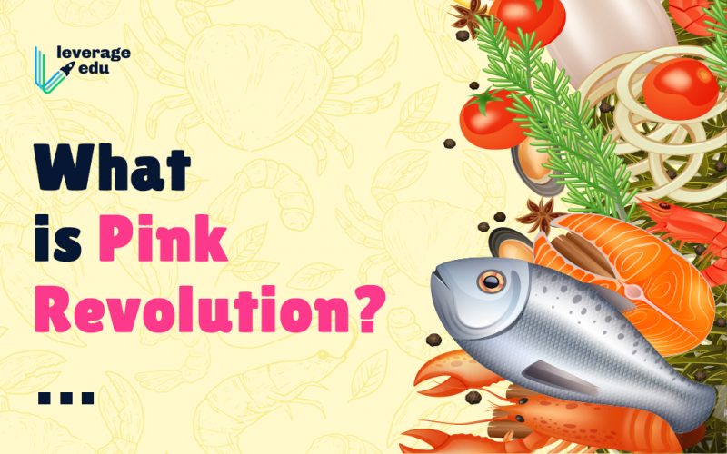 What is Pink Revolution