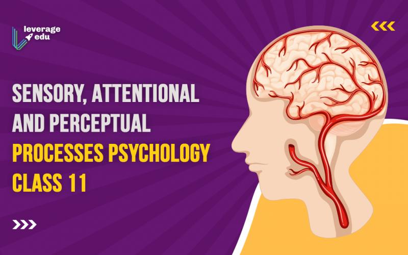 Sensory, Attentional and Perceptual Processes Psychology Class 11