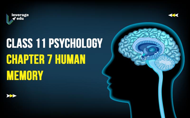 Class 11 Psychology Chapter 7 Human Memory