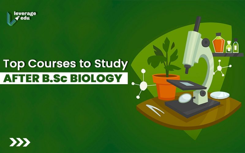 Top Courses to Study After BSc Biology
