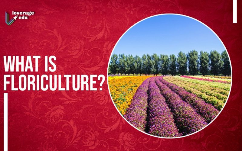 Here's a Seed to Grow a Career in Floriculture!